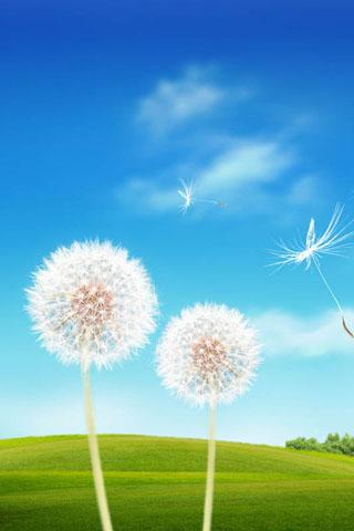 pics for gt samsung galaxy s3 wallpaper dandelion