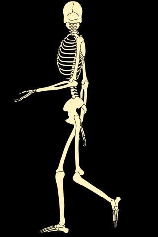 Skeleton Live Wallpaper - Android Informer. Skeleton Live ...