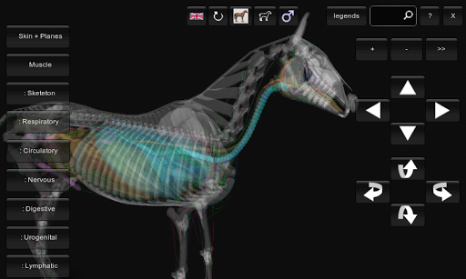 3D Horse Anatomy Software 1.1 Download (Free trial)