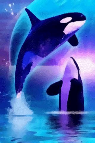 Pretty Whales Live Wallpaper September 5 2011