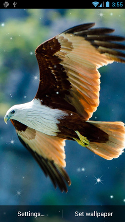Native American Live Wallpaper Source Eagle Free Download EagleLiveWallpaper